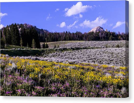 Red Lodge Spring Canvas Print by Rebecca Adams