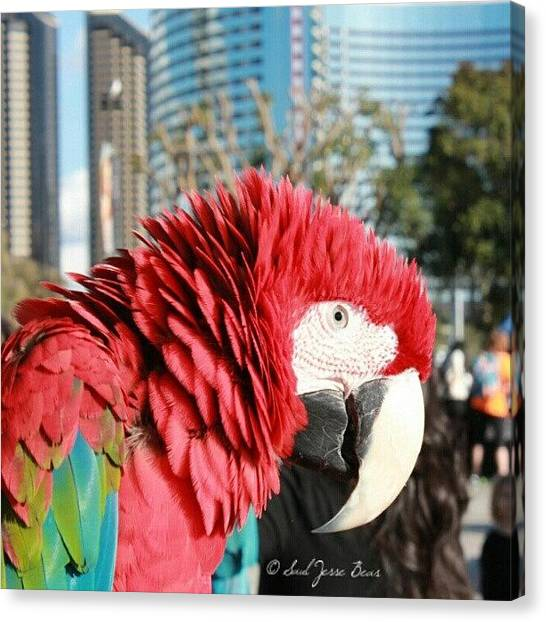 Macaws Canvas Print - Red Macaw:) In San Diego by Saul Jesse Beas