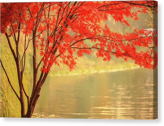 Red Maple Besides River Canvas Print by Uschools