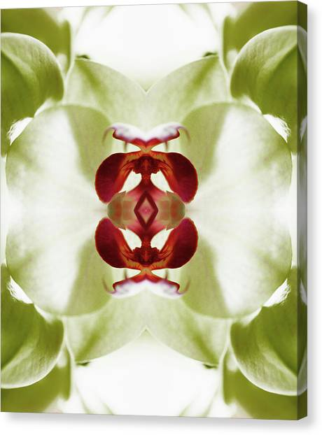 Red Orchid Canvas Print by Silvia Otte