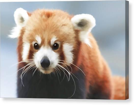Red Panda Staring Canvas Print