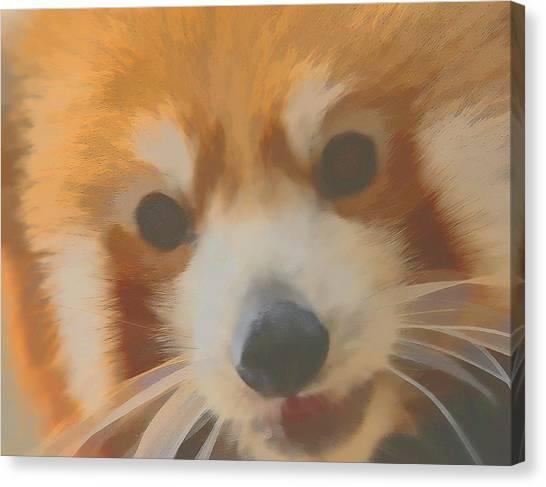 Red Panda Up Close Canvas Print