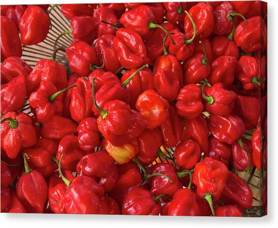Belize Canvas Print - Red Peppers At The Saturday Market, San by William Sutton