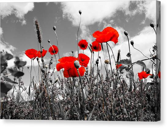 Red Poppies On Black And White Background Canvas Print