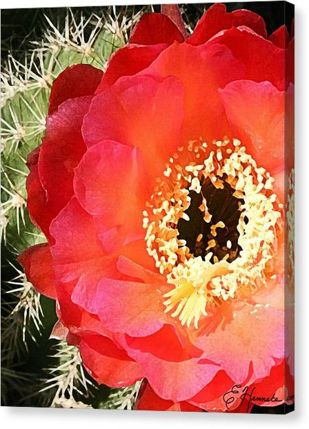 Red Prickly Pear Blossom Canvas Print