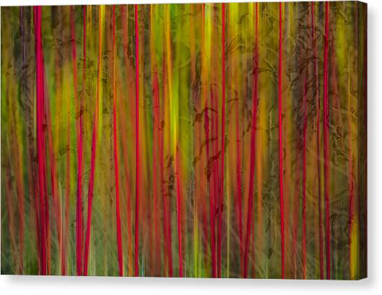 Red Reed Canvas Print