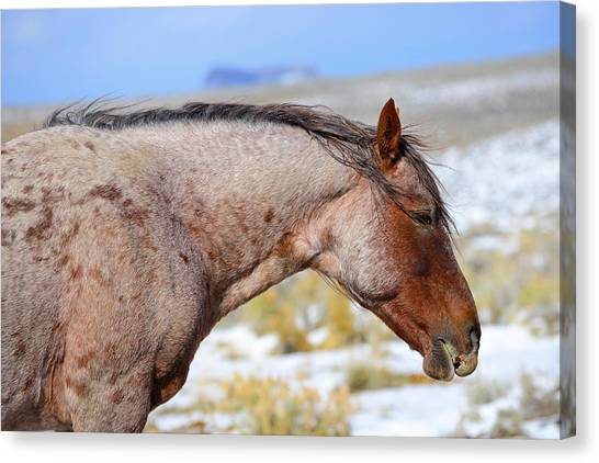 Red Roan Canvas Print