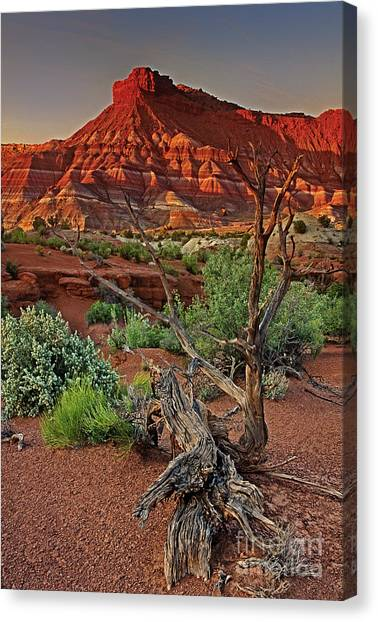 Red Rock Butte And Juniper Snag Paria Canyon Utah Canvas Print