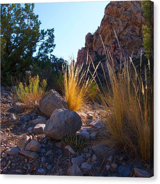 Red Rock Morning Light Canvas Print