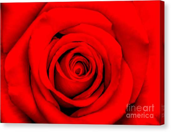 Birthday Gift Canvas Print - Red Rose 1 by Az Jackson