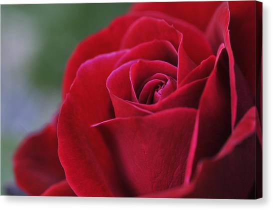 Red Rose Close 1 Canvas Print