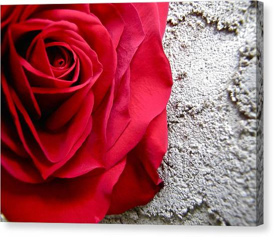 Red Rose On Wall Canvas Print