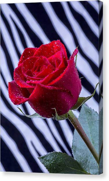 Wet Rose Canvas Print - Red Rose With Stripes by Garry Gay