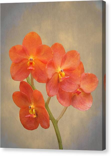 Red Scarlet Orchid On Grunge Canvas Print