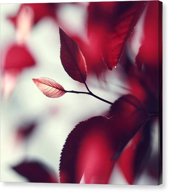 Red Spring Canvas Print by Beata  Czyzowska Young
