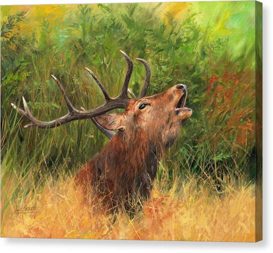 Bellows Canvas Print - Red Stag by David Stribbling