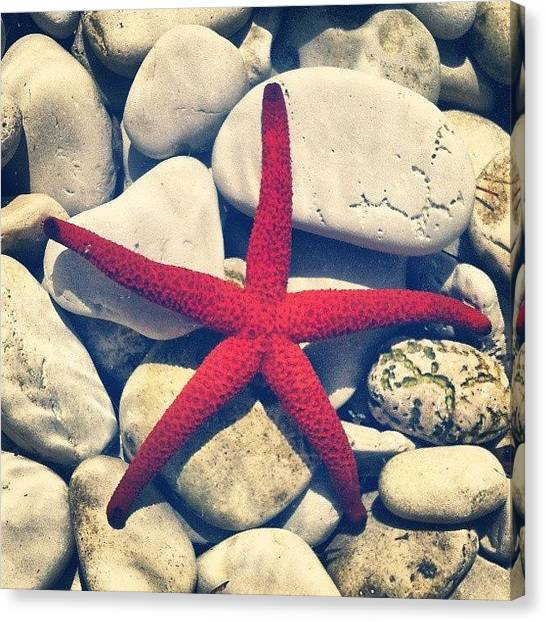 Colorful Canvas Print - Red Star! by Emanuela Carratoni