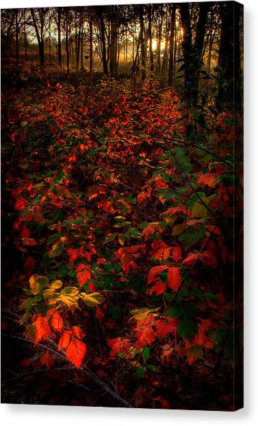 Red Sumac Canvas Print