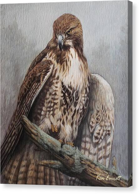 England Artist Canvas Print - Red Tail Hawk by Ken Everett