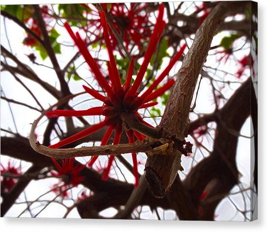Red Tree Spiders  Canvas Print