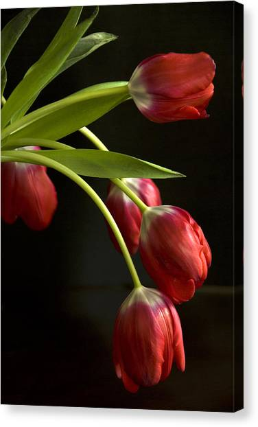 Red Tulips Canvas Print by Cindy Rubin