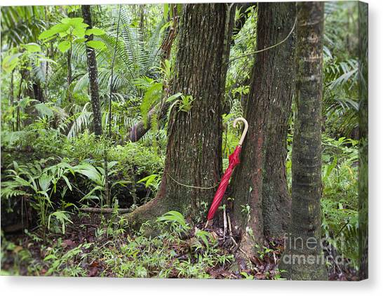 Canvas Print featuring the photograph Red Umbrella Leaning Against Tree In Rainforest by Bryan Mullennix