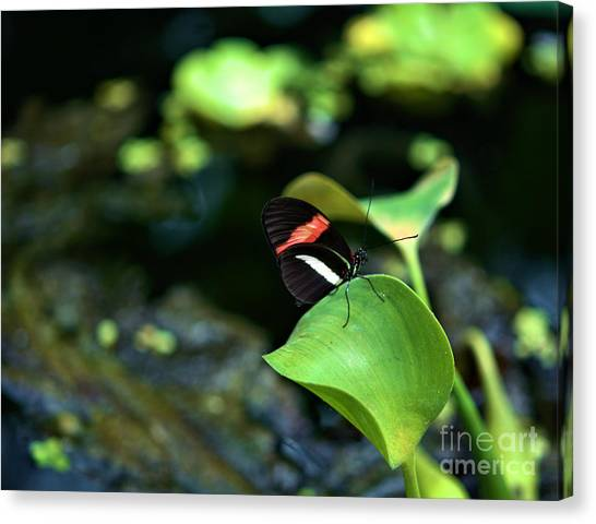 Red White Black Butterfly Canvas Print