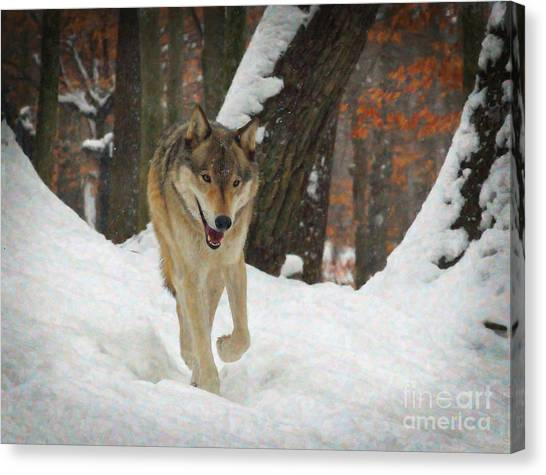 Canvas Print - Red Wolf On A Winter Hunt by Lianne Schneider