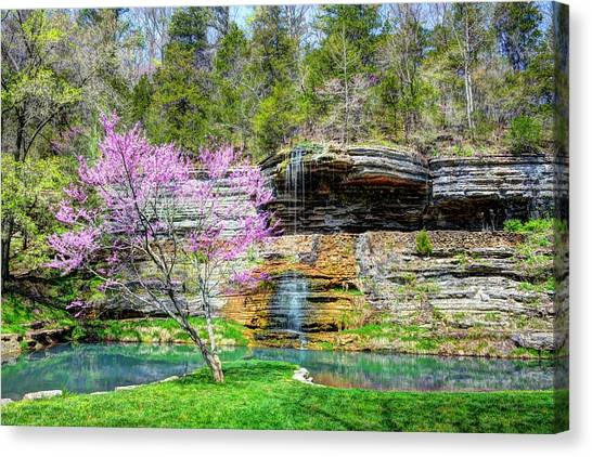 Redbud And Waterfall Canvas Print
