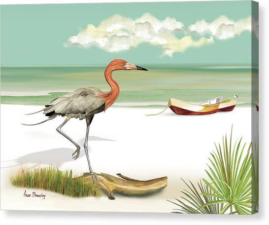 Reddish Egret Canvas Print