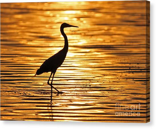 Reddish Egret At Sunset Canvas Print