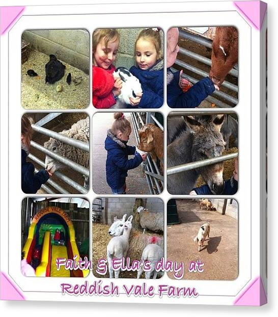 Goats Canvas Print - #reddishvalefarm #babyanimals #cute by Antonia Riley