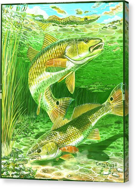 Trout Canvas Print - Redfish Haven In0018 by Carey Chen