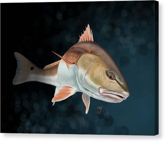 Redfish Inspection Canvas Print