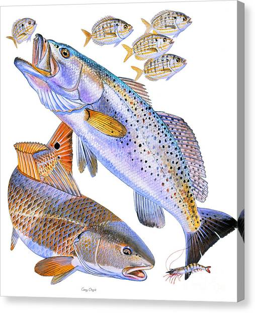 Shrimping Canvas Print - Redfish Trout by Carey Chen