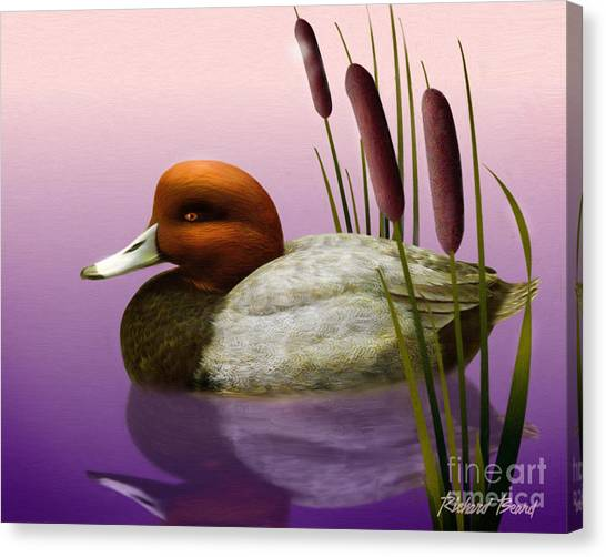 Redhead And Cattails Canvas Print
