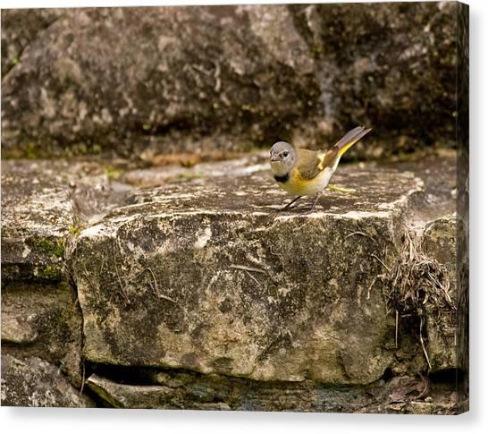 Redstart In Ruins Canvas Print
