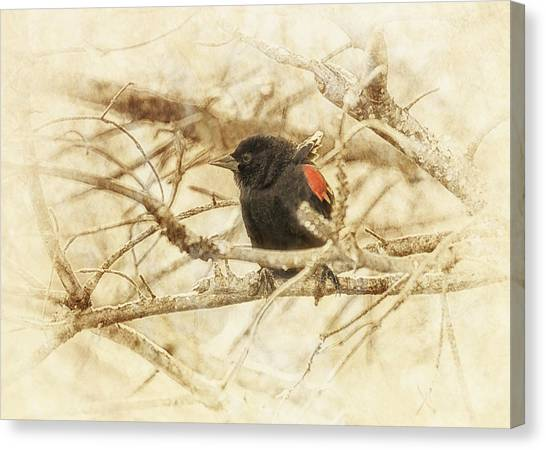 Blackbirds Canvas Print - Redwing In The Wind by Susan Capuano