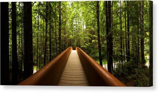 Rainforests Canvas Print - Redwood Bridge by Chad Dutson
