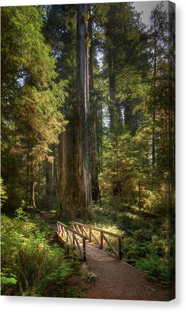 Redwood Forest On A Perfect Spring Day Canvas Print