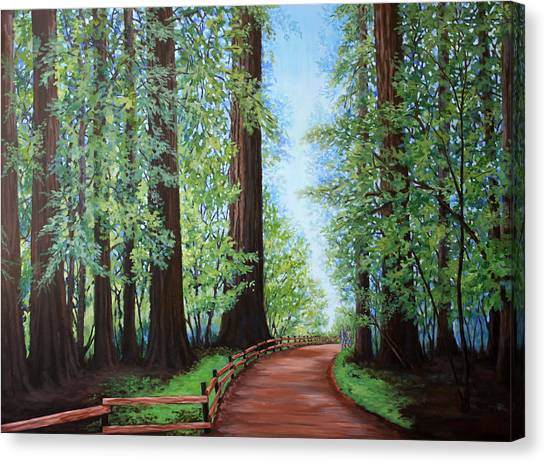 Redwood Forest Path Canvas Print