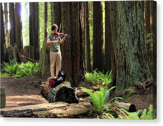 Redwood Symphony   Canvas Print
