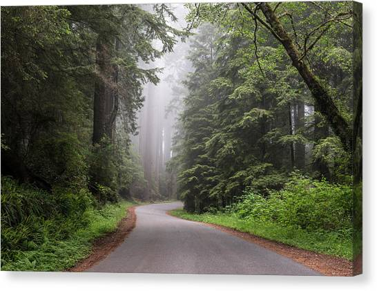 Redwoods In Northern California Canvas Print
