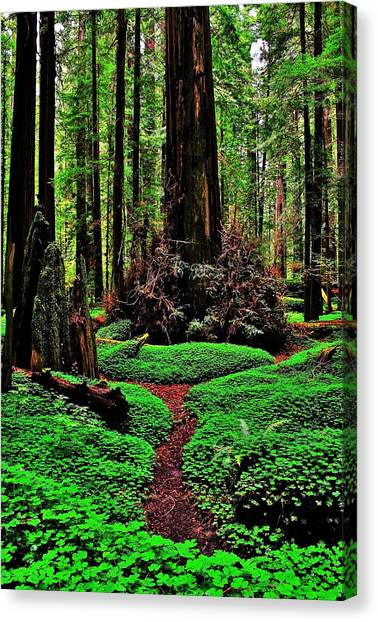 Redwood Forest Canvas Print - Redwoods Wonderland by Benjamin Yeager