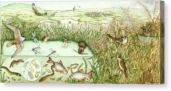 Newts Canvas Print - Reed Bed Habitat by Lizzie Harper/science Photo Library