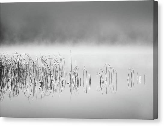 Reed In Fog Canvas Print by Benny Pettersson