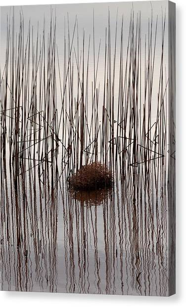 Reed Reflection Canvas Print by T C Brown