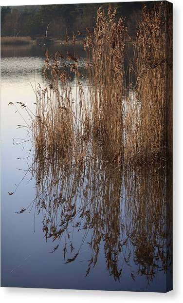 Reed Reflections Canvas Print by Shirley Mitchell