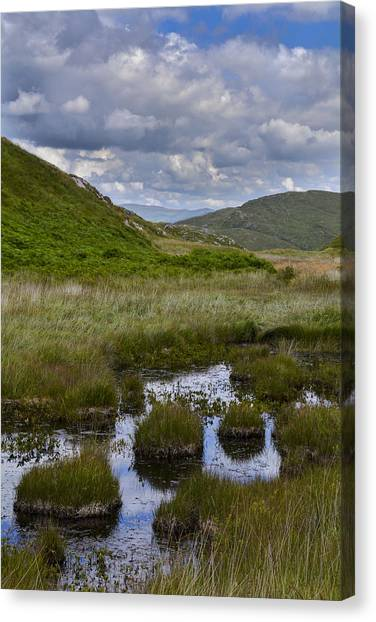 Reeds And Reflections Canvas Print