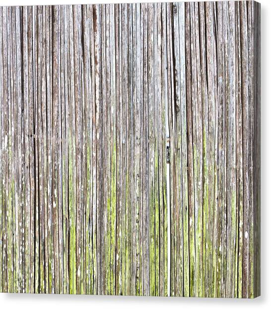 Wicker Canvas Print - Reeds Background by Tom Gowanlock